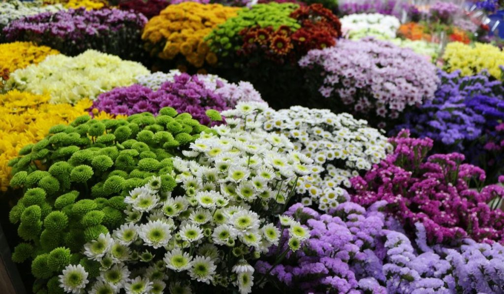 different kinds of fowers